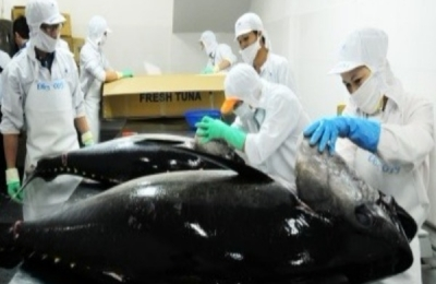 EXPORTS OF PROCESSED TUNA TO MEXICO CONTINUED THE RISE
