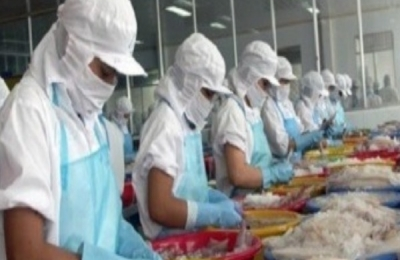 REBOUNDED IN VIETNAM CEPHALOPOD SALES TO CHINA