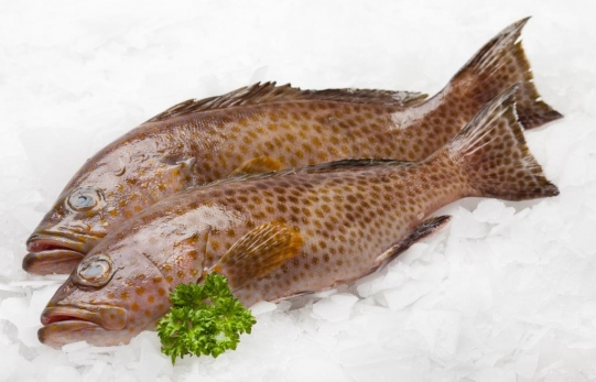 Frozen Grouper