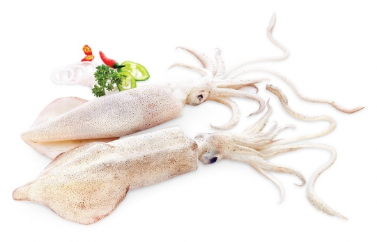 Frozen Loligo Squid Whole Round