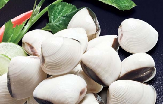 Frozen Whole White/Brown Clam