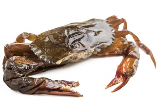 Frozen Soft shell crab
