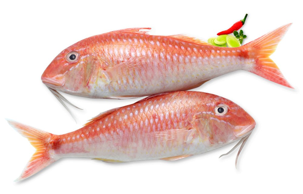 Frozen red mullet for Red mullet fish